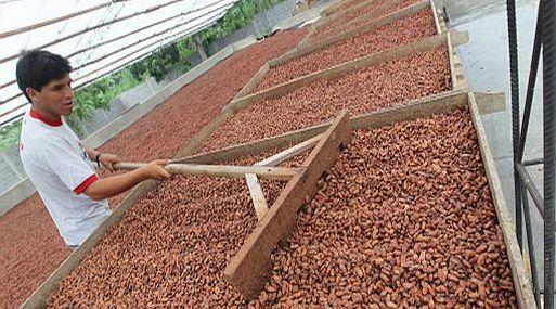 <b>Agroexportación.</b> El Perú exporta el 36% del caco que produce. (Foto: USI)