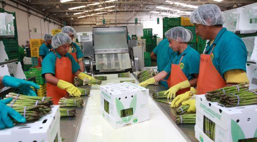 Los espárragos es uno de los productos que se deja de exportar a Honduras. (Foto: USI)