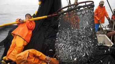 """¿Cree que este año la """"vedette"""" del crecimiento será la pesca?"""