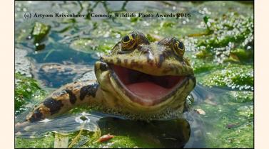 Estas son las mejores imágenes del Concurso de Fotografía Humorística de la Fauna Silvestre