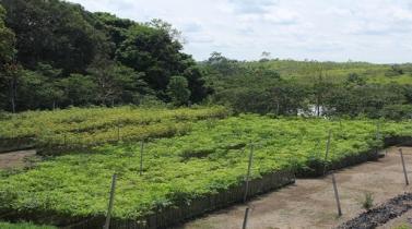 Banco Mundial planea emitir bonos verdes en Perú en favor del medio ambiente