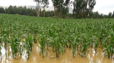 Credicorp Capital: Hay vida después de El Niño Costero