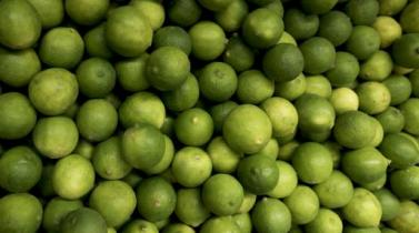 Minagri a favor de la importación de limones