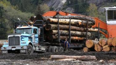 Tras disputar con Canadá, Estados Unidos importa más madera de Rusia