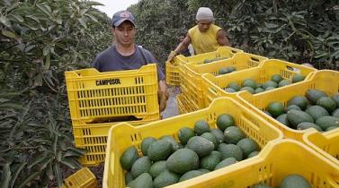 ¿Cuál es el aporte de la tecnología al desarrollo agrícola?