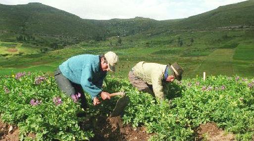Minagri: Sector agropecuario tuvo crecimiento récord de 9% en julio