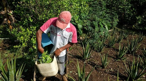 """Las FARC son """"el principal facilitador de la actual situación de narcóticos en Colombia"""", dijo el diplomático, gran conocedor de ese país, donde fue embajador entre 2007 y 2010."""